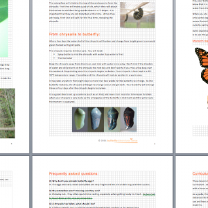 Caterpillar Kit Instructions and classroom butterfly lifecycle activities