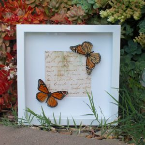 Real Monarch Butterfly Art 3