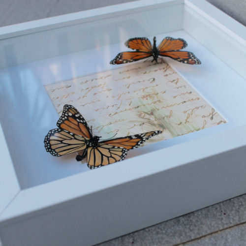 Butterfly Jewellery and Gifts
