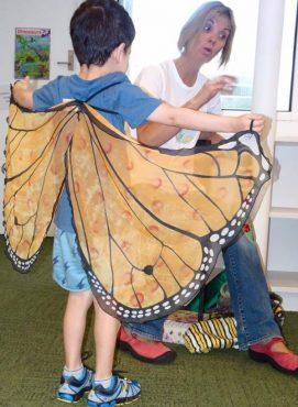 Butterfly-Presentation-e1546860299518.jpg